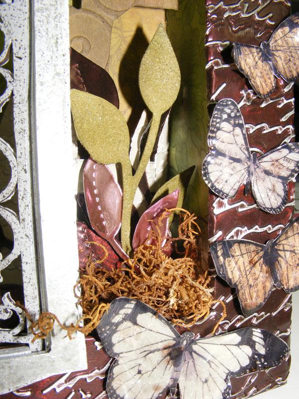 Closeupbutterflies